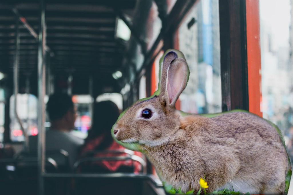 Nietypowy pasażer w autobusie ZKM Gdynia