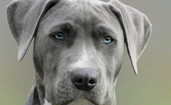 bazar dla psow i kotow rumia sierpien 2020(1)