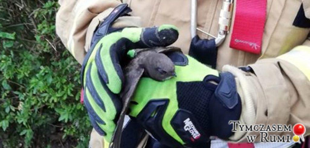 Rumscy strażacy uratowali jerzyka! :)