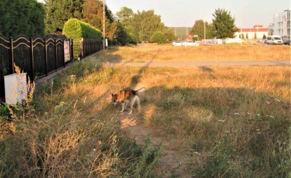 zagubione psy rumia bezpanskie psy rumia zgloszenia gdzie zglosic straz miejska 2020