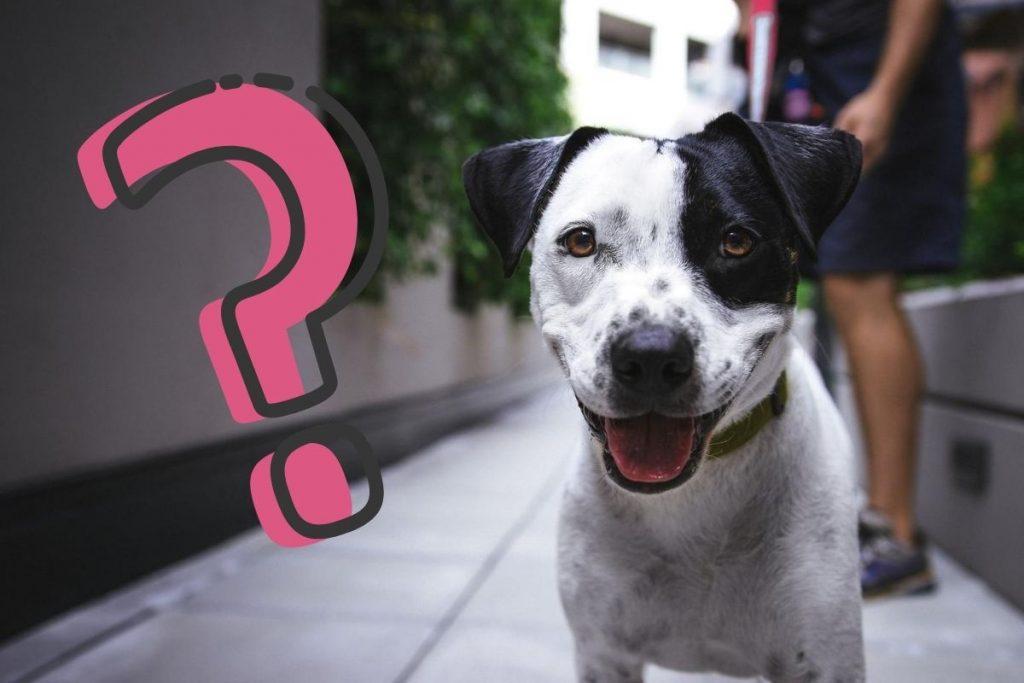 Gdzie zgłosić zagubione, zaginione i bezpańskie psy w Rumi?