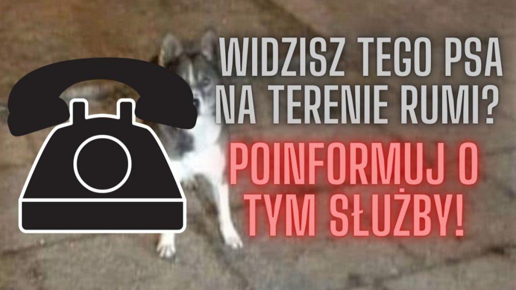 Jeśli widzisz tego psa na terenie Rumi – poinformuj służby!