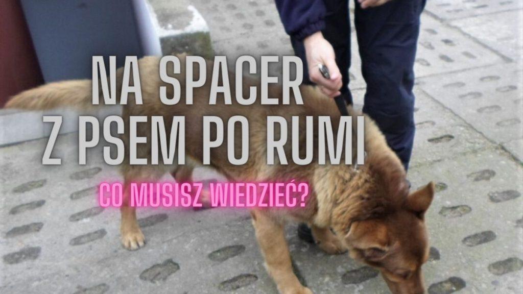 Spacer z psem po Rumi – co musisz wiedzieć?